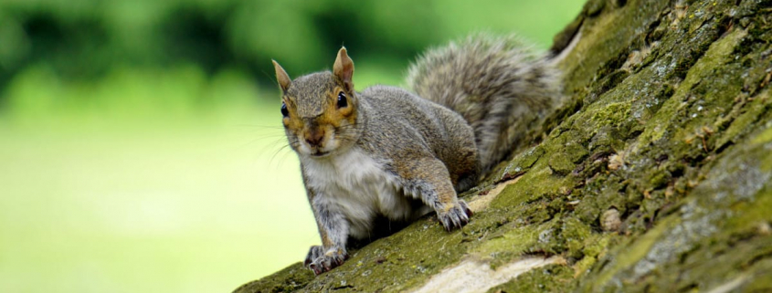 Best Pellet Gun For Squirrels